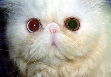 Cat Has Goop In Eye