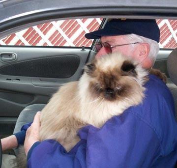 feline friend can provide.