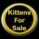 go to available kittens