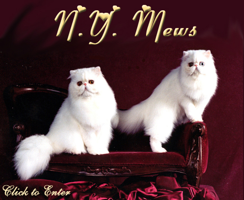 NYMews Persians and Himalayans kittens and cats